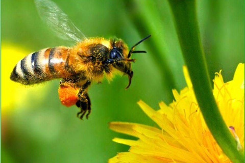 """Пчеларите може да бъдат подпомогнати по схемата """"де минимис"""""""