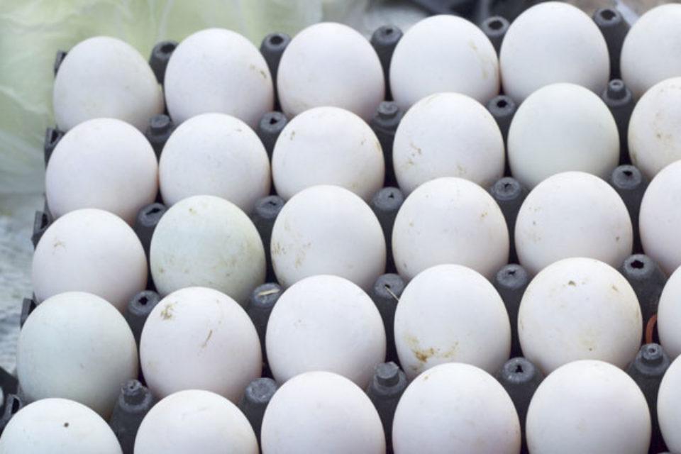 БАБХ изтегли от пазара над 310 хил. яйца и 15 317 кг храни